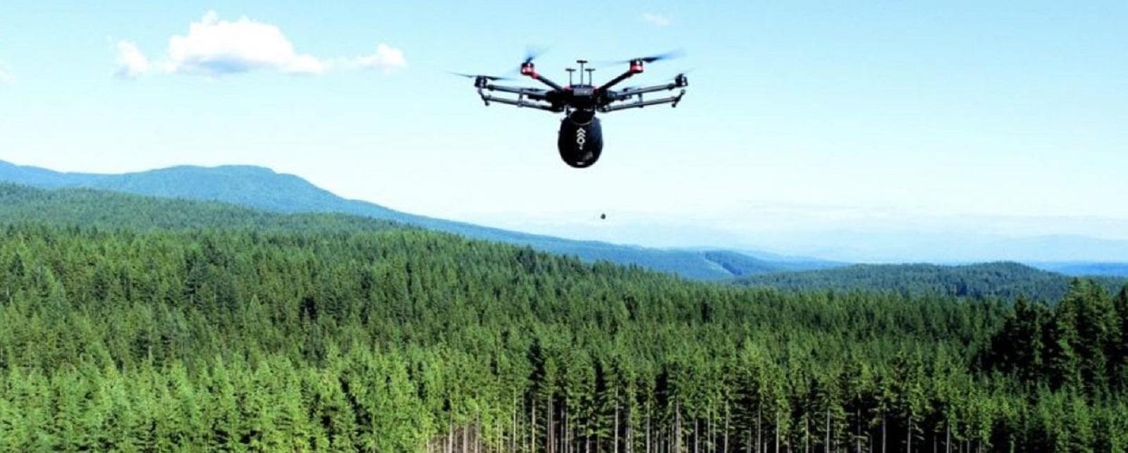 Дроны Flash Forest высаживают деревья в 10 раз быстрее людей